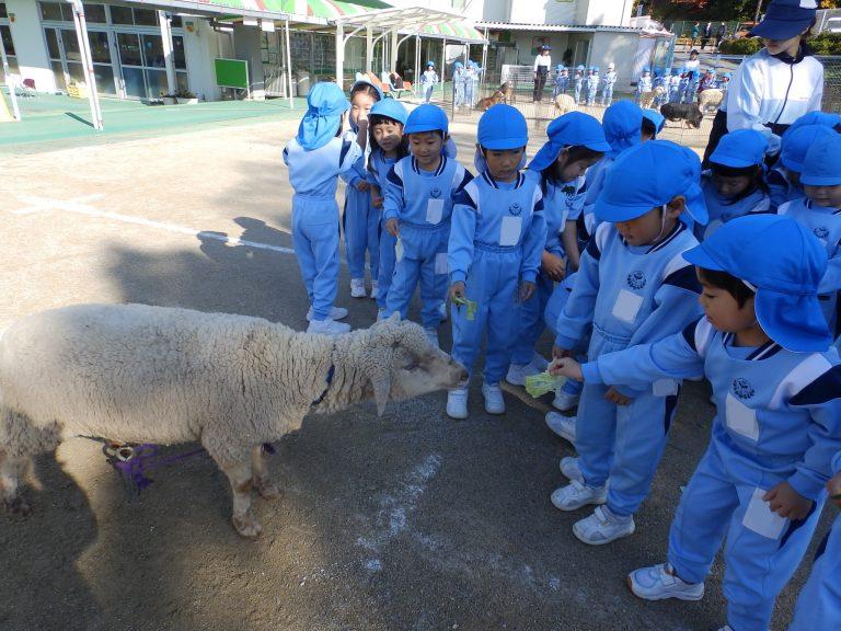 こども動物園 ⑩ まつ組