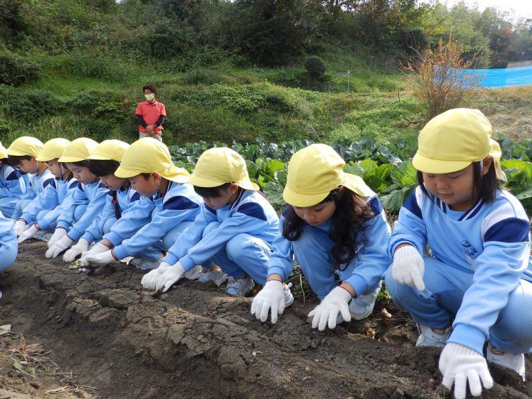 芋掘り ② すみれ組