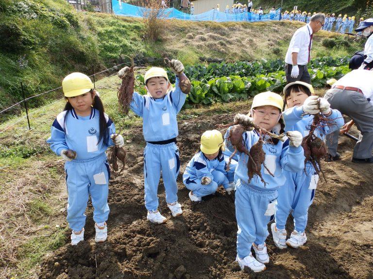 芋掘り ⑦ ひまわり組